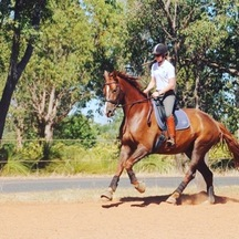 Young warmblood in dressage training with sophie warren and portland jones