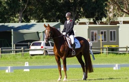 Eminence cross country eventing thoroughbred